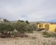 Ref 484 Albatera23 – Garden1