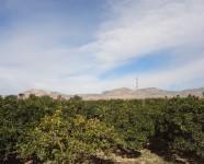 Ref 484 Albatera25 – Area2
