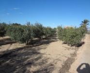 Ref 620 El Altet3 – Garden5