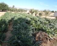 Ref 620 El Altet33 – Garden4