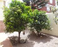 Ref 404 Monte33 – Back garden1